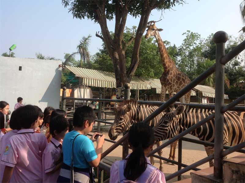 Tổ chức cho học sinh tham quan công viên Thiên đường Bảo Sơn.